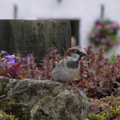 sparrow - Brillianto Images
